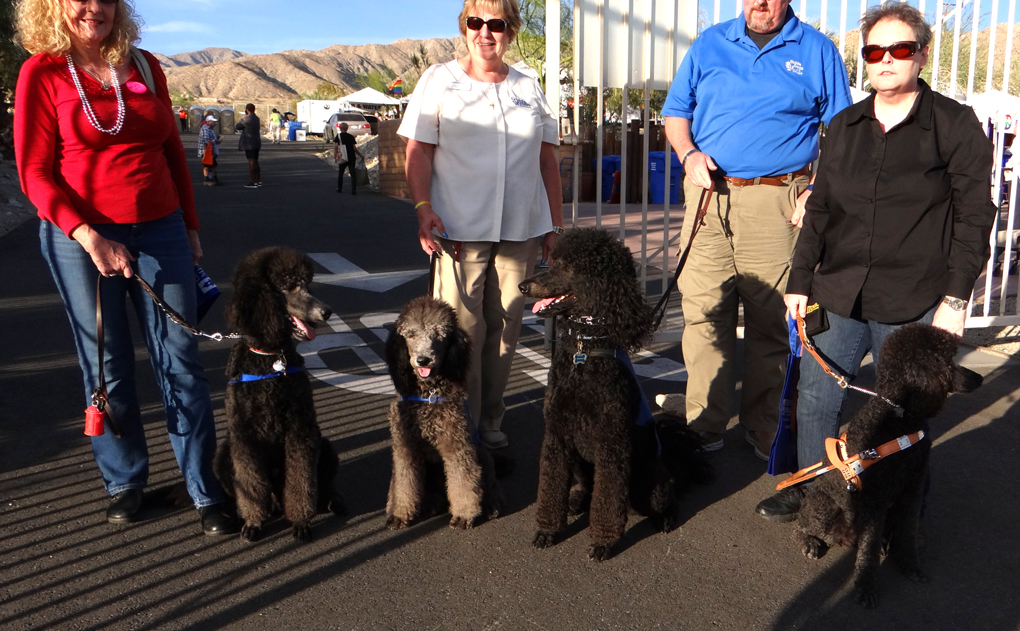 Guide Dogs Of The Desert